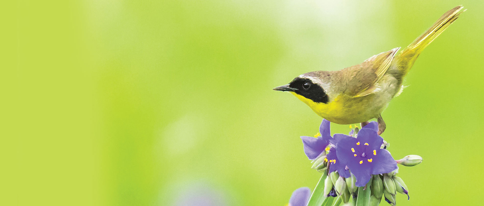 Photo of a bird on a flower